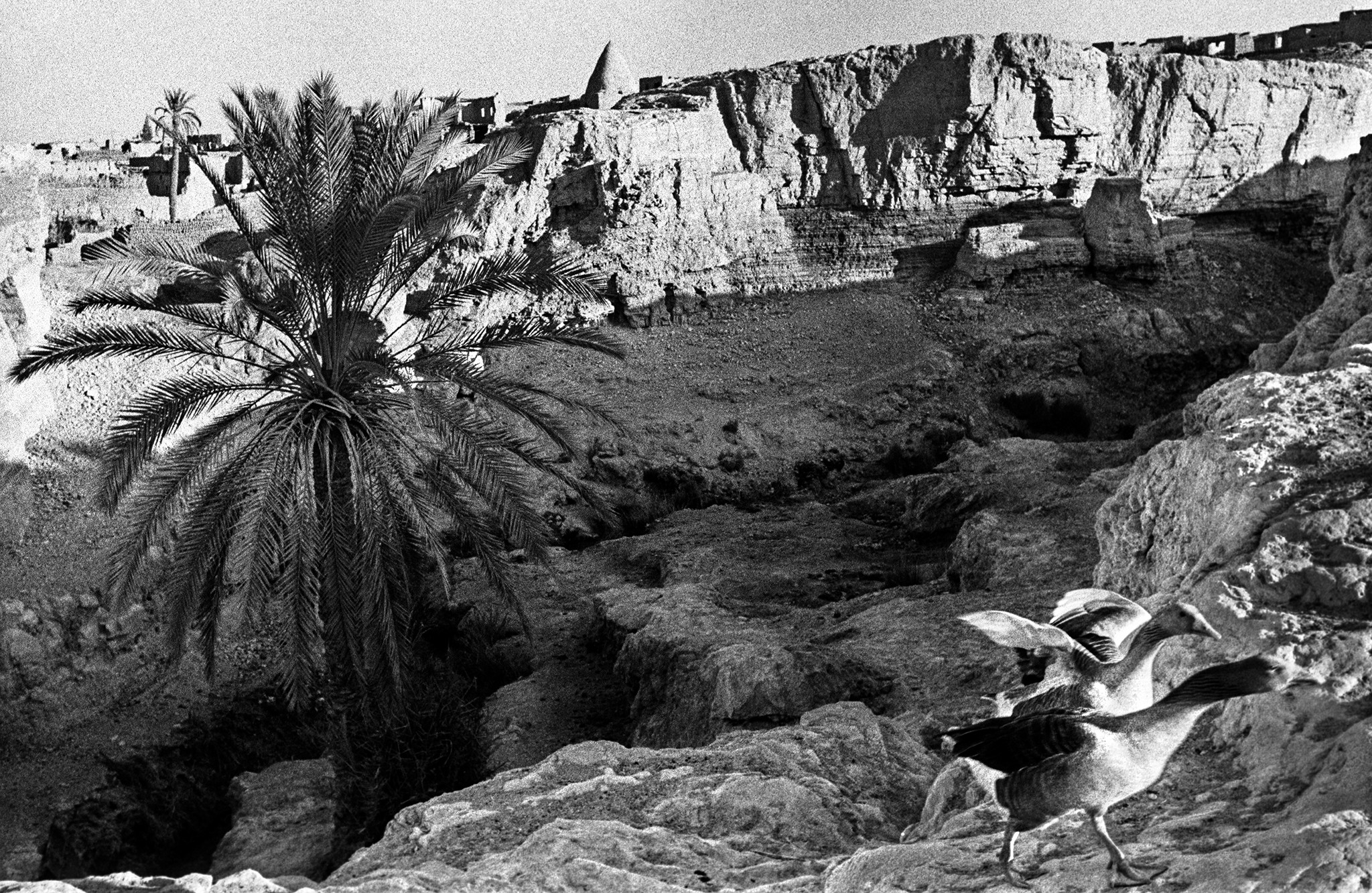 Sèrie: Els Oasis d'Egipte. Oques de Meidoun. Bahariya. Oasis d'Egipte. 1984