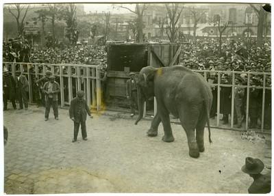 Arribada de l'elefanta Júlia al Zoo de Barcelona