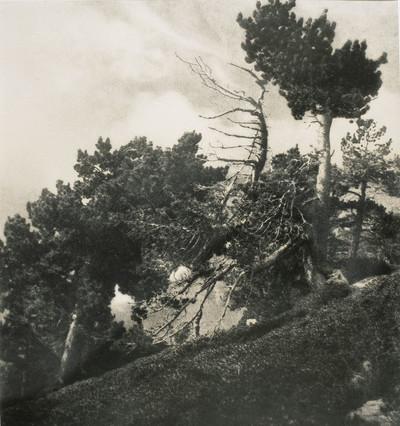 Bosc de la Verge