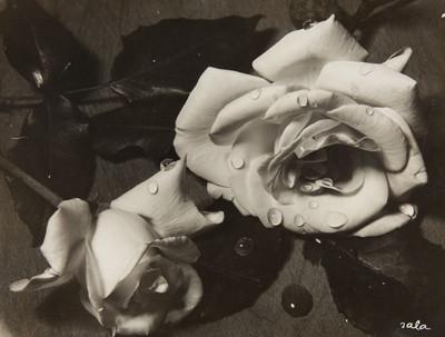 [Roses]