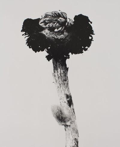 Fungus Mungus