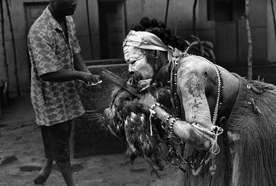 Sèrie: Viatge al país de les ànimes. Komian Kodjo Niamké posseïda per l'esperit de la pantera beu la sang d'un gall sacrificat. Grand Bassam 2010. Costa d'Ivori