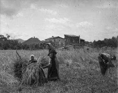 Vista parcial d'un camp, a Olot