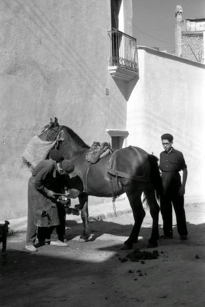 La familia Salvany ferrant un cavall