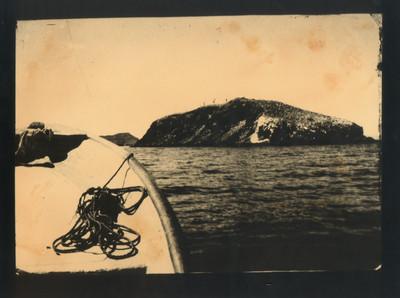 Observant les aus i els llops marins a Isla Coronado. 1871