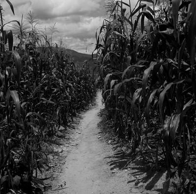 """El camino. Col·lecció """"Guatemala"""""""