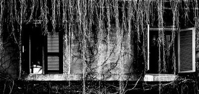 Plantas colgantes (Serie En clave baja)