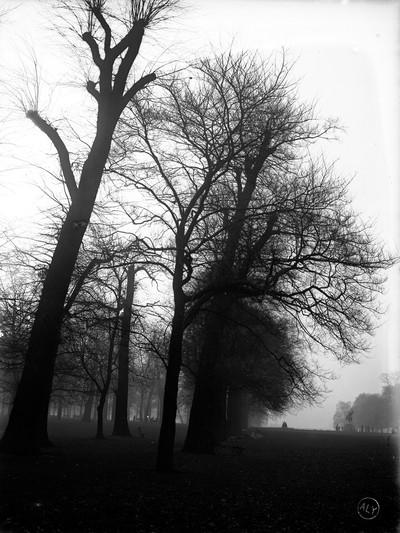 Arbres de Kensington Gardens a Londres